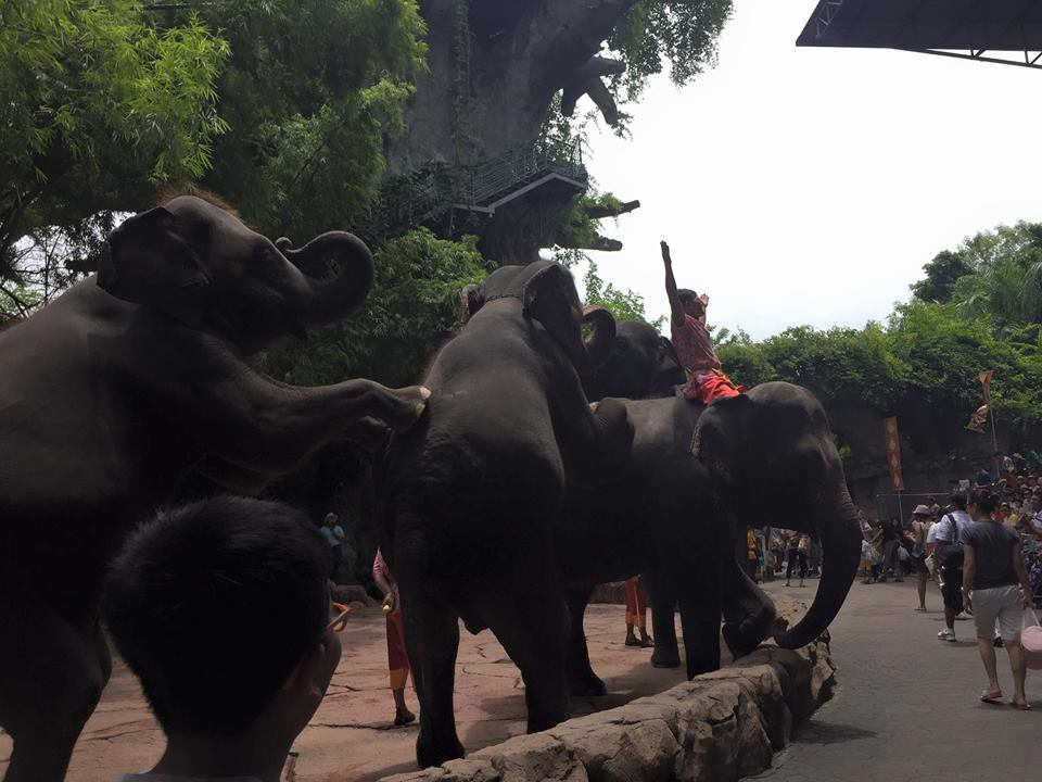 Honeymoon bangkok thailand Bangkok Marriott Hotel Sukhumvit bangkok zoo elephants 5 Honeymoon Guide