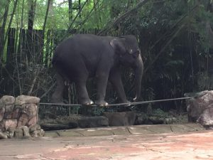 Honeymoon bangkok thailand Bangkok Marriott Hotel Sukhumvit bangkok zoo 4
