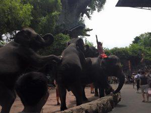 Honeymoon bangkok thailand Bangkok Marriott Hotel Sukhumvit bangkok zoo elephants 5